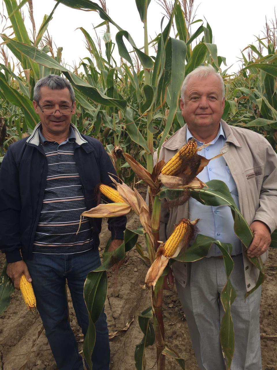 Оглянули посіви кукурудзи виробництва НВФГ