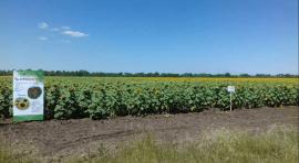 Фермерське господарство «БРАТ»